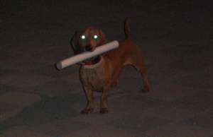Oli, o cãozinho zumbi colaborando