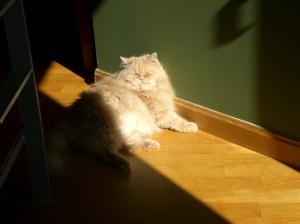 gato1