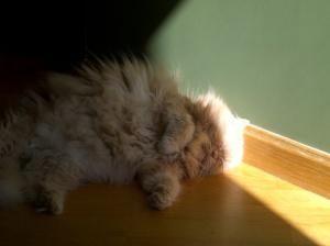 gato2